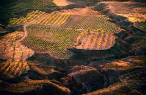 the-rocks-vineyard